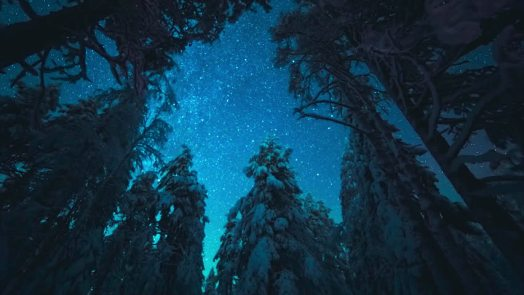 Snow pines in night forest